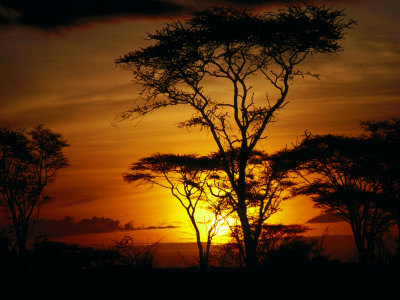 copy-of-bn1558_1-fbsunset-through-trees-masai-mara-national-reserve-kenya-posters
