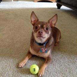 My Sweet Dog Joey